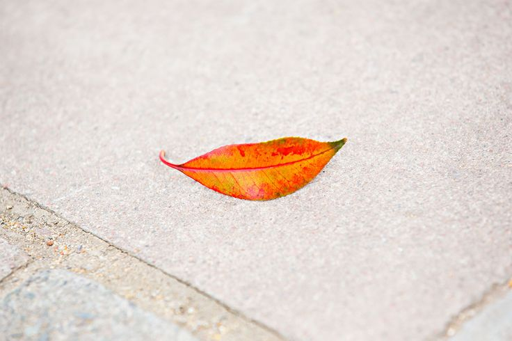 Beautiful image using the leaf to create a mouth on the sidewalk