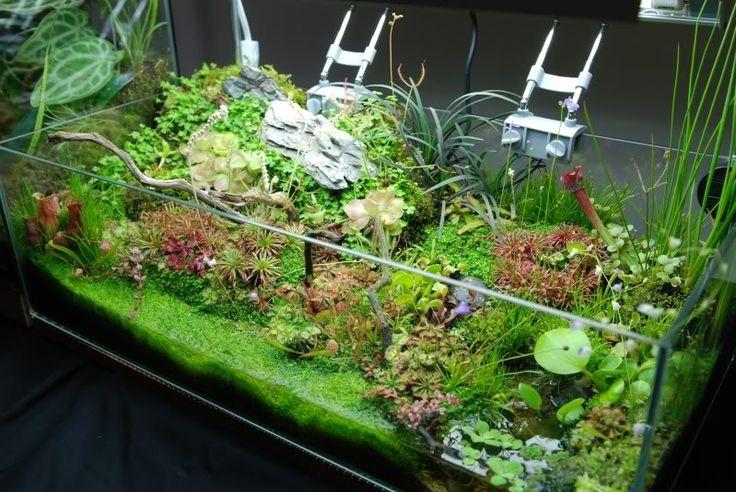 76 best carnivorous plants images on pinterest for Fish tank garden