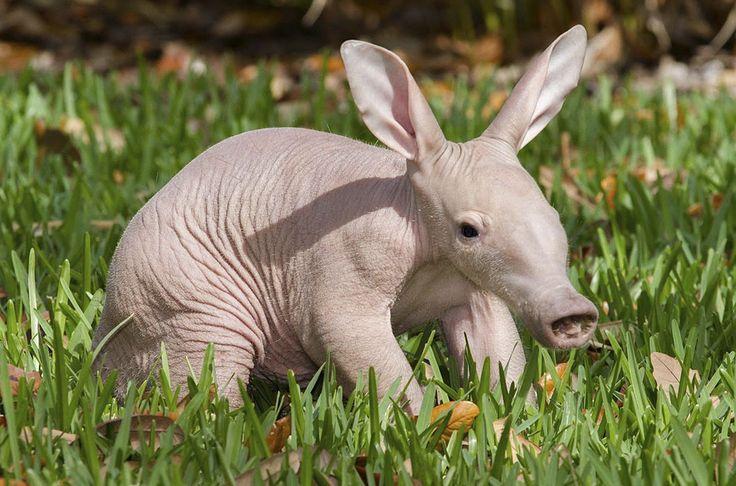 Странные животные в природе.
