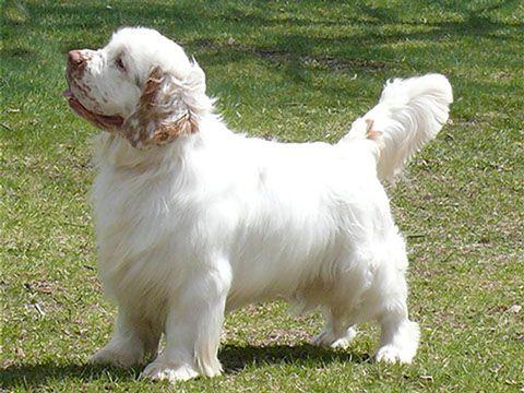 doggy style position rosa sidan