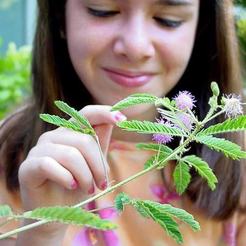 Kil-meg-planten