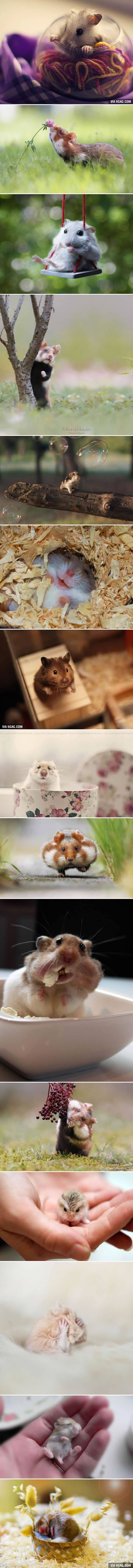 Adorable Hamsters That Will Cause A Cuteness Overload