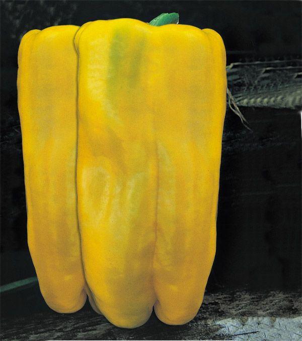 Rasaduri de ardei galben clasic, lunguiet de tip ¾ patrat Folie Solar