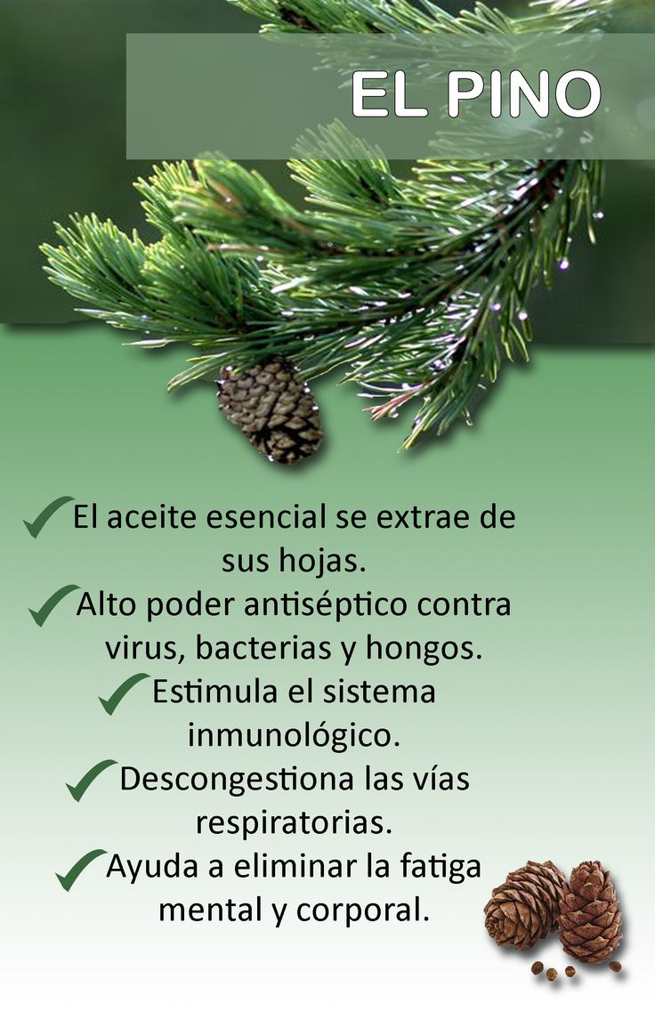 Beneficios del aceite de pino | Las plantas medicinales ...