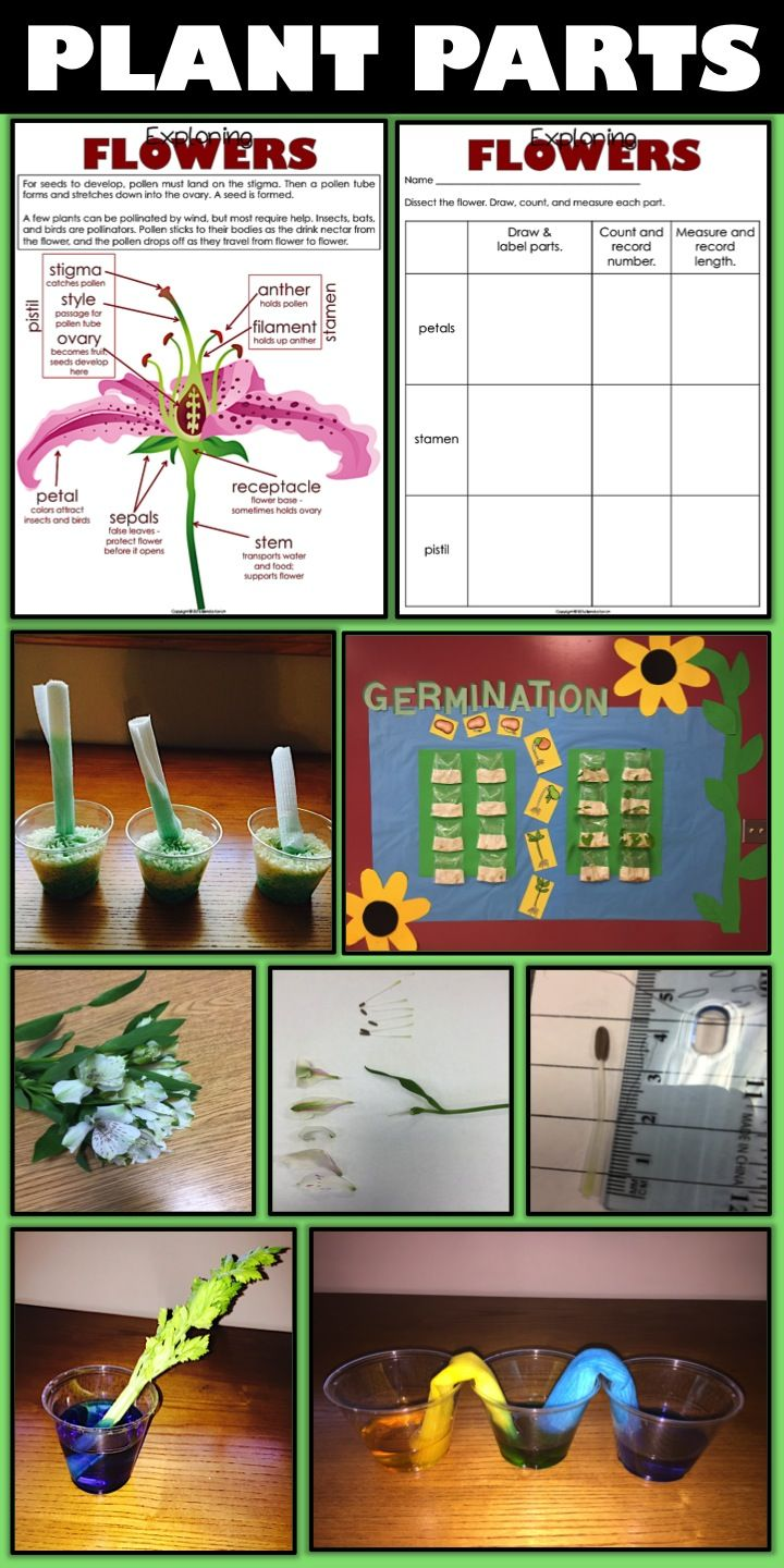 Cool ideas for teaching plant parts and their functions from Enjoy Teaching (Grades 3-5)