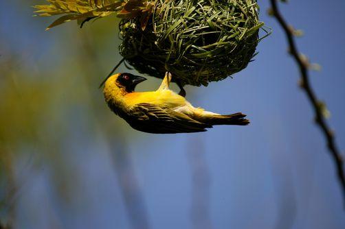 Pretoria, South Africa   Ijaz Bhatti/National Geographic