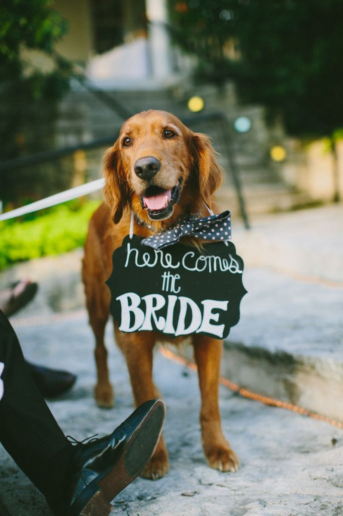 """""""Here comes the bride.""""  Calling on a furry member of your family to announce the bride is a great alternative to using him/her as a ring-bearer."""