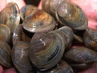 How to Clean Clams - Easy Steps for Cleaning Clams