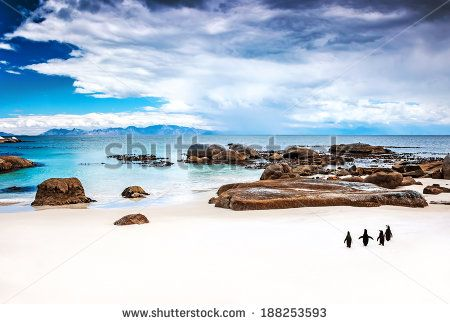 Penguin And Beach Stock Photos, Images, & Pictures | Shutterstock