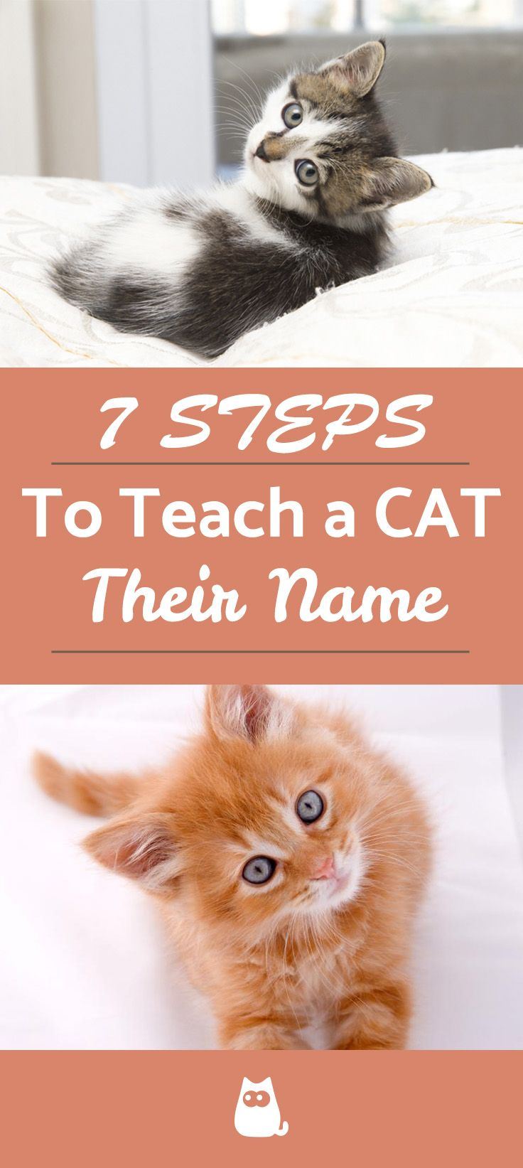 How To Teach A Cat Its Name 7 Simple Steps Kitten Adoption Cat Adoption Cats Outside