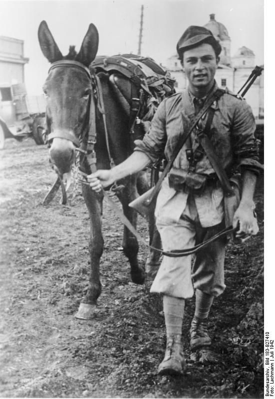 Italian soldier with his mule. The weapon he's carryng is the carbine ( Moschetto) version of the  old Mannlicher-Carcano M 91 , cal. 6.5. Russia  July 1942