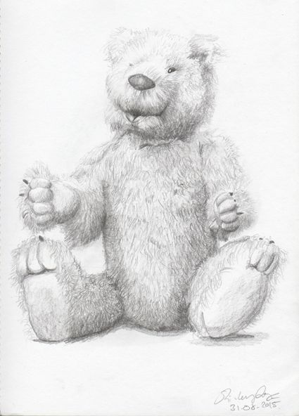 Bergamin Bear  by Shirley Dougan. Pencil sketch.