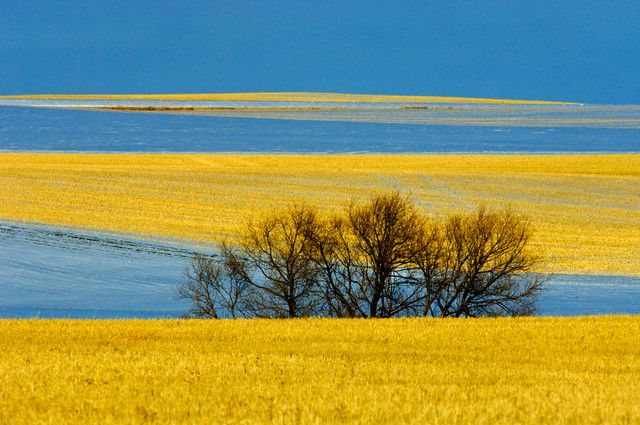 Saskatchewan. canola and flax fielsds