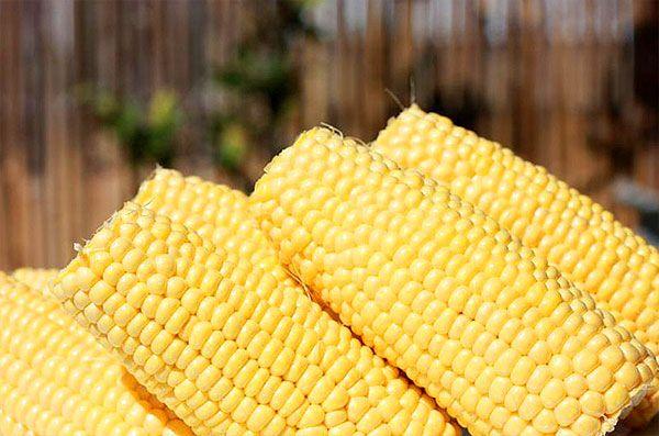 kukurydza-budyń