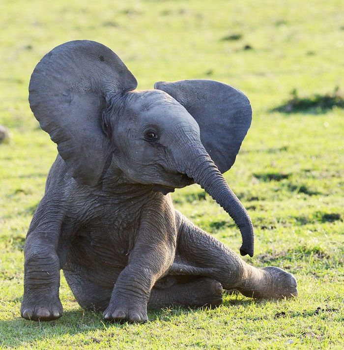 35+ Reasons Why Baby Elephants Are The Cutest Animals Ever | Bored Panda