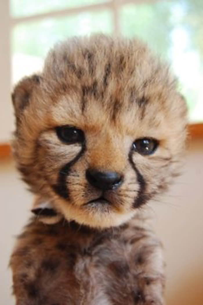 I want one