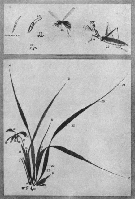 The Orchid Plant and Flower. Plate LII.