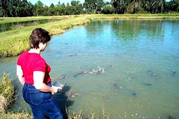 The 25 best ideas about catfish farming on pinterest for Catfish aquaponics