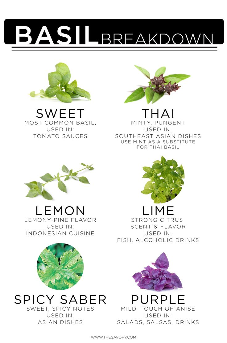 6 Types of Basil and How to Use Them…Deliciously | Obsev