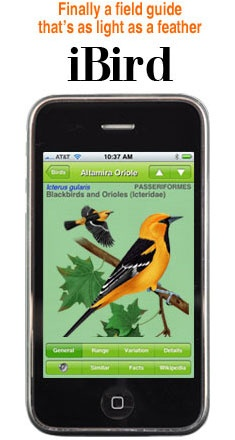 iBird for your phone is a really great app for identifying birds anywhere you have your cell phone... It has the birds call so you can hear what the sound like which helps with identification.