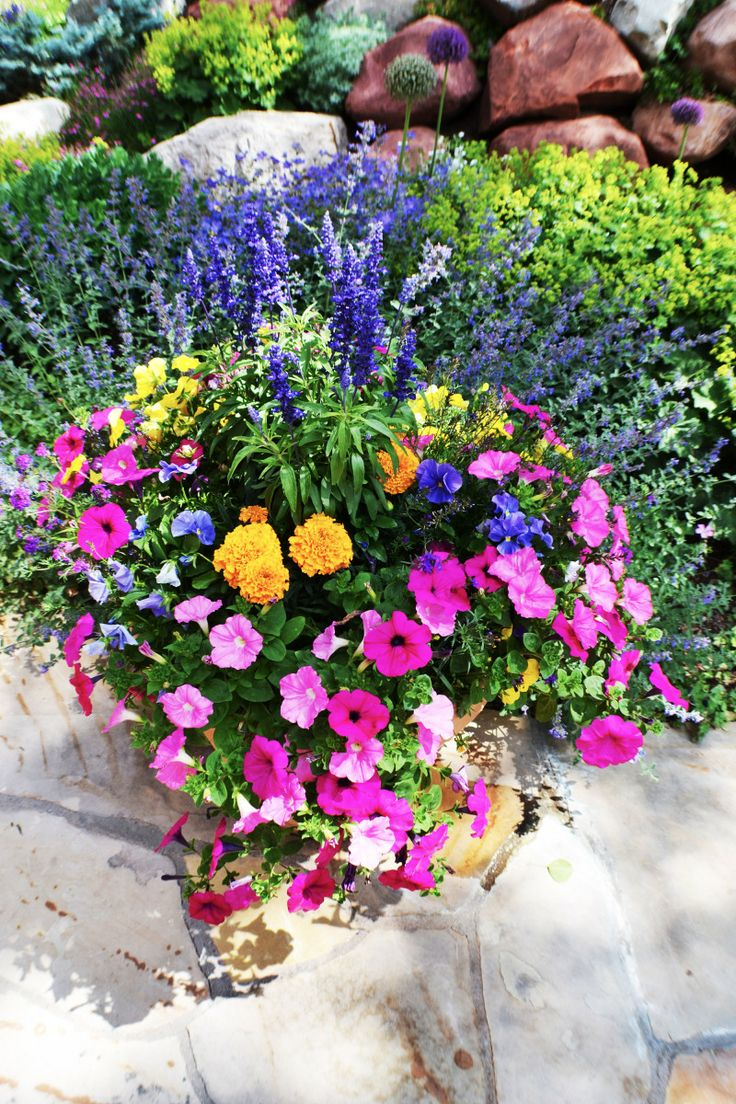 25+ Best Annual Flowers Ideas On Pinterest