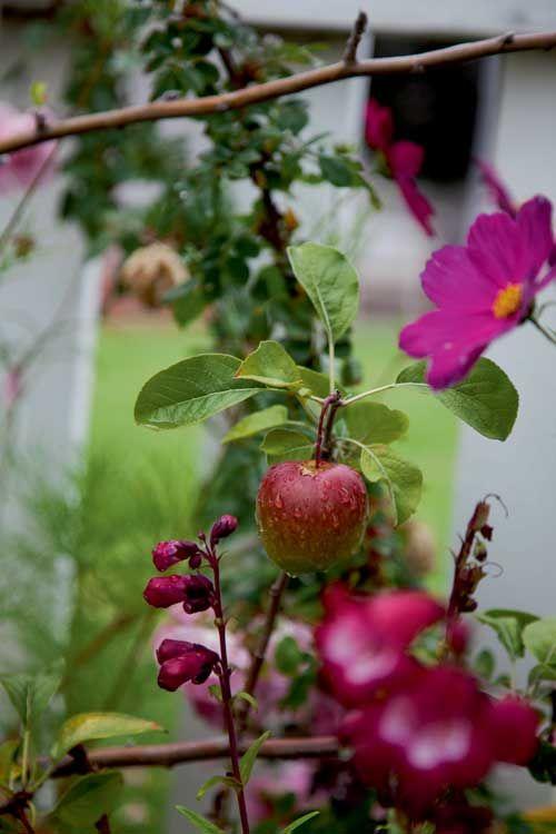 16 best Shade Loving Plants images on Pinterest ...