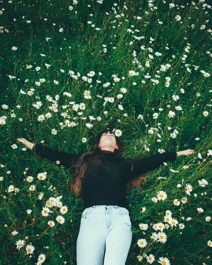 Best 25+ Meadow Flowers Ideas On Pinterest
