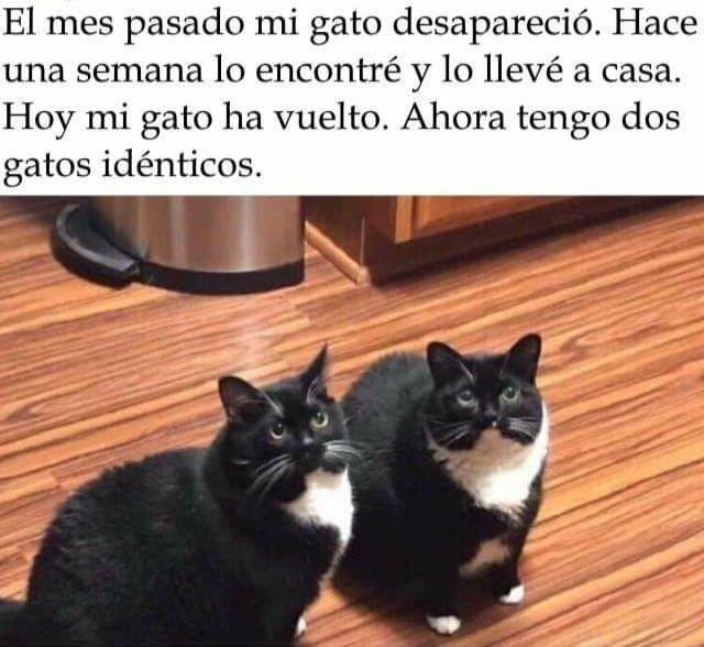 Los Mejores Memes De Gatos Memes En Espanol La Mejor Recopilacion De Memes Lo Mas Viral De Internet Meme Gato Memes Gatos