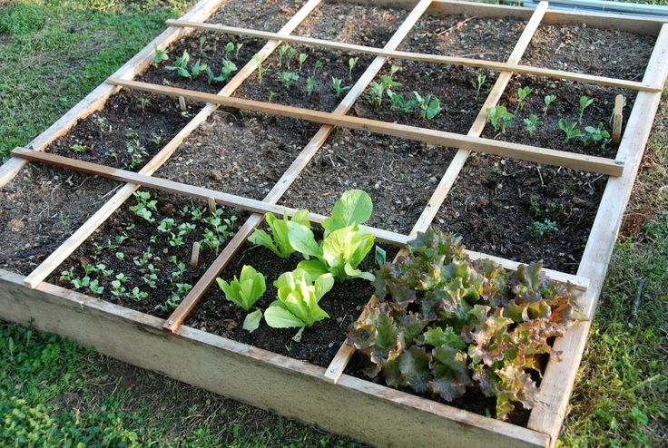 #SQUARE GARDENING -a very clever idea for the home gardener.  Each square is 1ft square and this is where the name comes from.  The grid helps you to keep just the right amount of produce coming in for your home. SAVE MONEY AND GROW YOUR OWN.     http://www.SquareFootGardeningTips.com