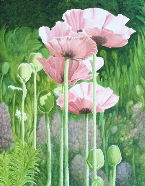 Paintings for sale - eileen boyd art and gardens