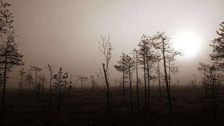 Misty morning - TiJa Art