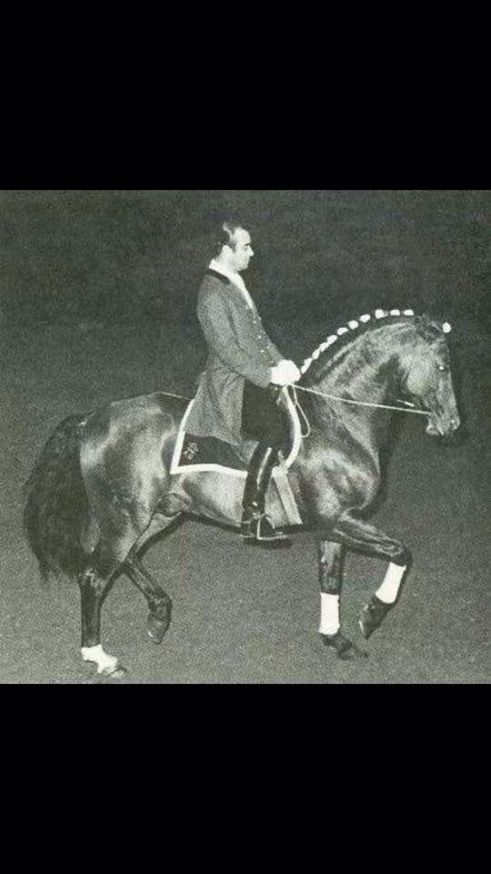 Nuno Olivera