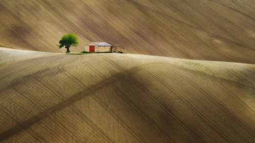 Loneliness by paolo bisonni