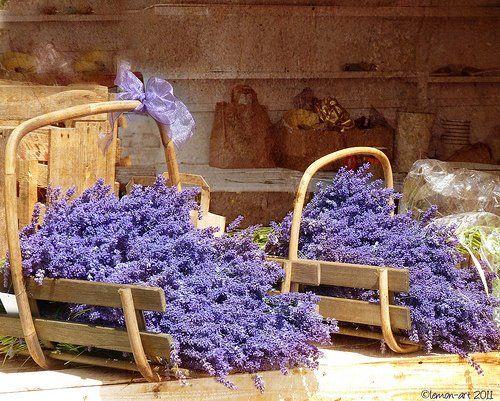 lavender: Purple, Lilac, Things, Flowers, Lavender, Garden