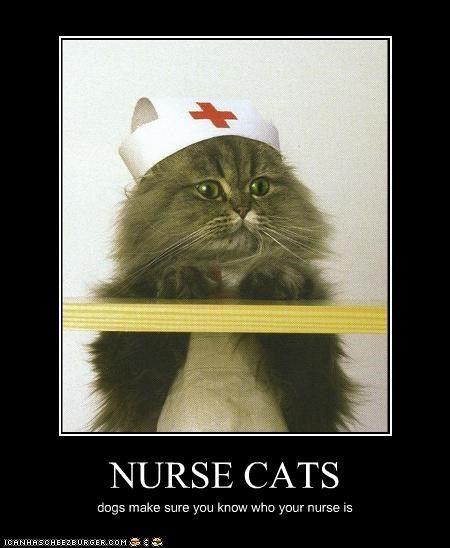 Nurse cats | Cats | Pinterest | Cats and Nurses