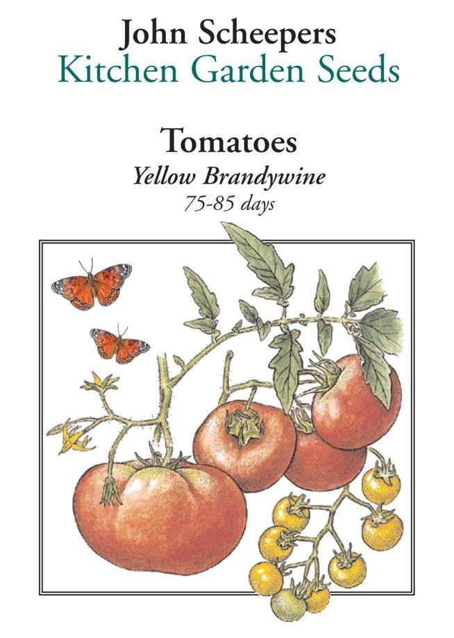 Yellow Brandywine Tomato   Heirloom Tomatoes   Tomatoes   Fruits U0026  Vegetables   Garden Seeds