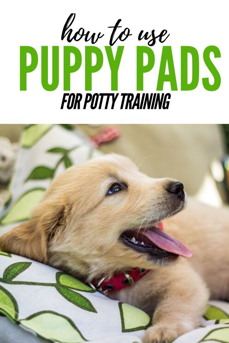 Puppy pads don't work