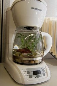 OLD coffee maker / NEW aquarium