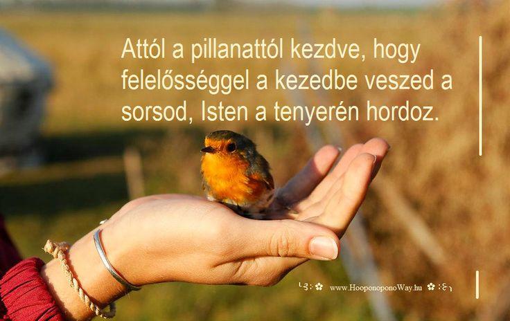 Hálát adok a mai napért. Attól a pillanattól kezdve, hogy felelősséggel a kezedbe veszed a sorsod, Isten a tenyerén hordoz. Így nem csak az eddigi szűk kis világod, de az egész Univerzum támogató otthonoddá válik. Így szeretlek, Élet!  ╰⊰⊹✿ Köszönöm ♡ Szeretlek εїз Ho'oponoponoway ✿⊹⊱╮ www.HooponoponoWay.hu