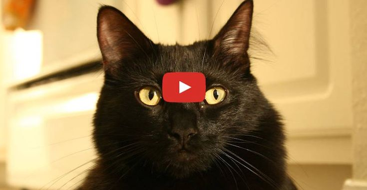 Did you know that October 27th is National Black Cat Day in the UK?