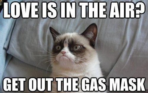 Grumpy Cat Memes | Grumpy Cat Merchandise I would say this too!
