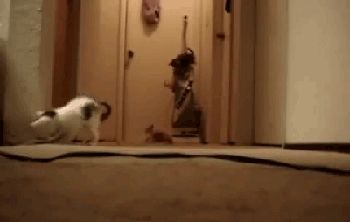 The kittens who activated a vacuum cleaner. | 33 Animal GIFs That Are Guaranteed To Make You Laugh