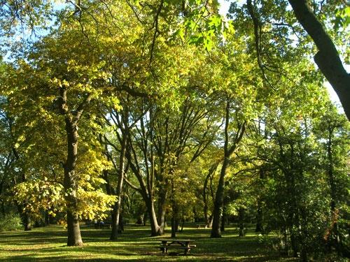 Oak knoll park oak glen california pinterest for Oak glen park