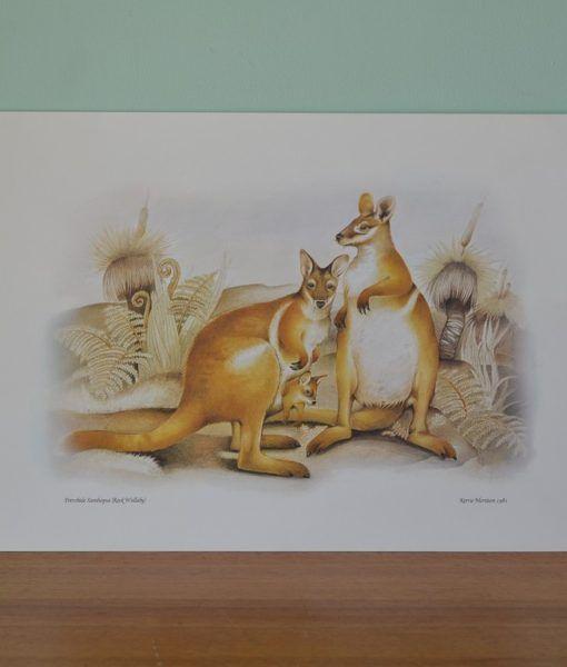 Vintage print Kerrie Mortison 1981 Rock Wallaby Australiana