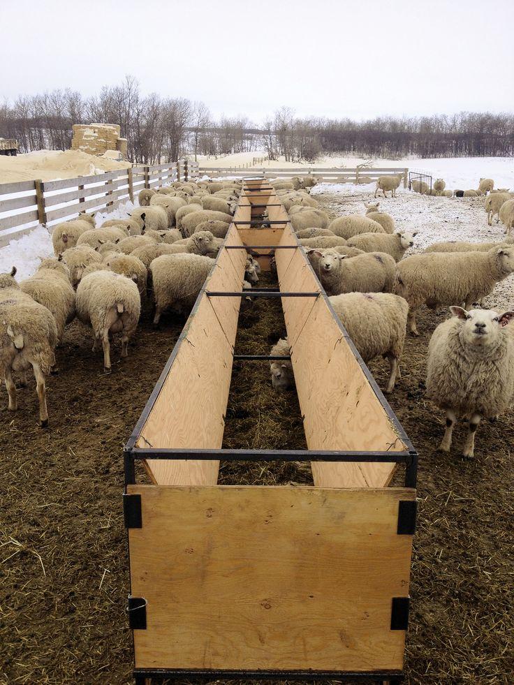 sheep bunk feeder | Producer Profile: Catto Sheep Farm, Lipton, SK | Sheep Canada magazine