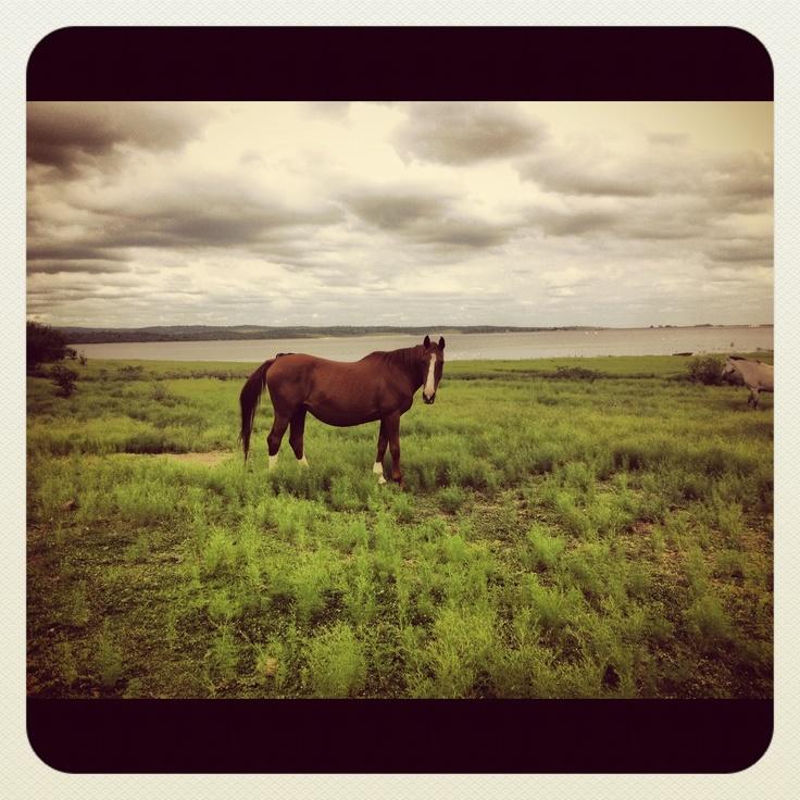 Equidad, santuario de caballos en San Marcos Sierra (Córdoba, Argentina).