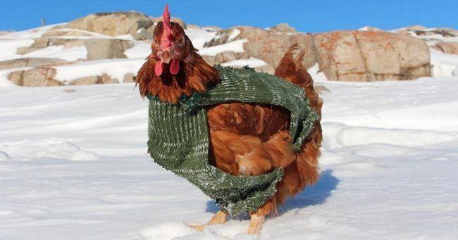 Top 10 des photos de Guirec et sa poule Monique en voyage