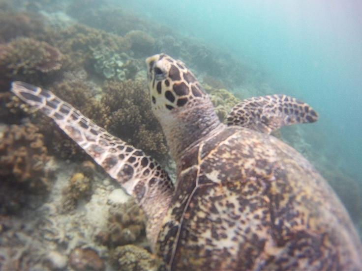 I při běžném šnorchlování se můžete seznámit s mořskou želvou ;)