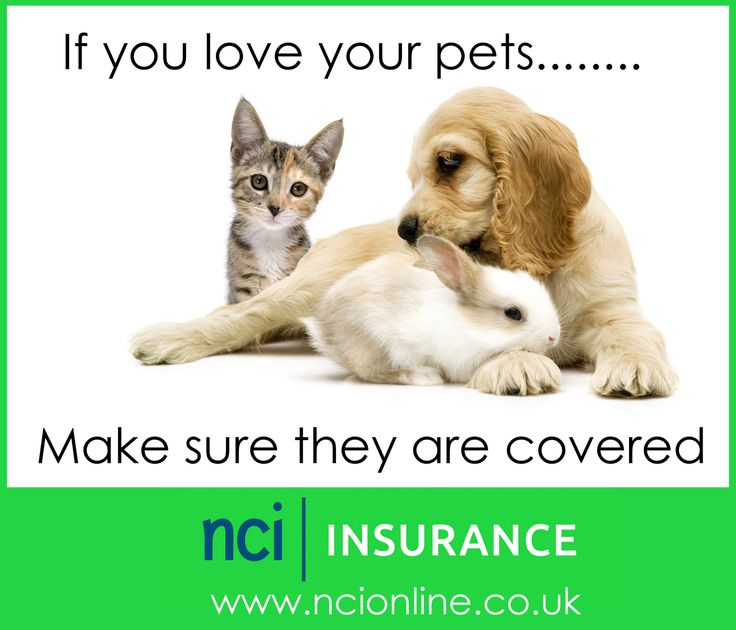NCI Pet Insurance for dogs, cats and rabbits. UK Based service.