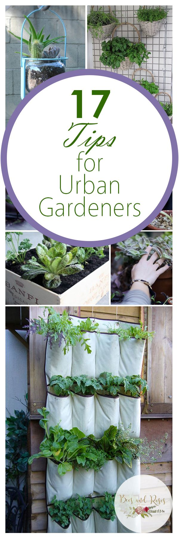 Urban Gardening, BEES AND ROSES, A great website!